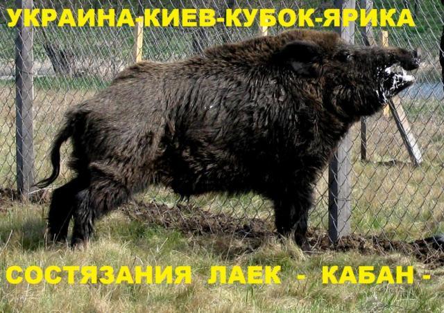 post-3062-0-56368500-1412181108_thumb.jpg