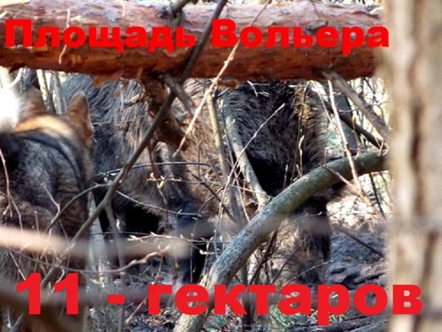post-3062-0-57242300-1412181118_thumb.jpg