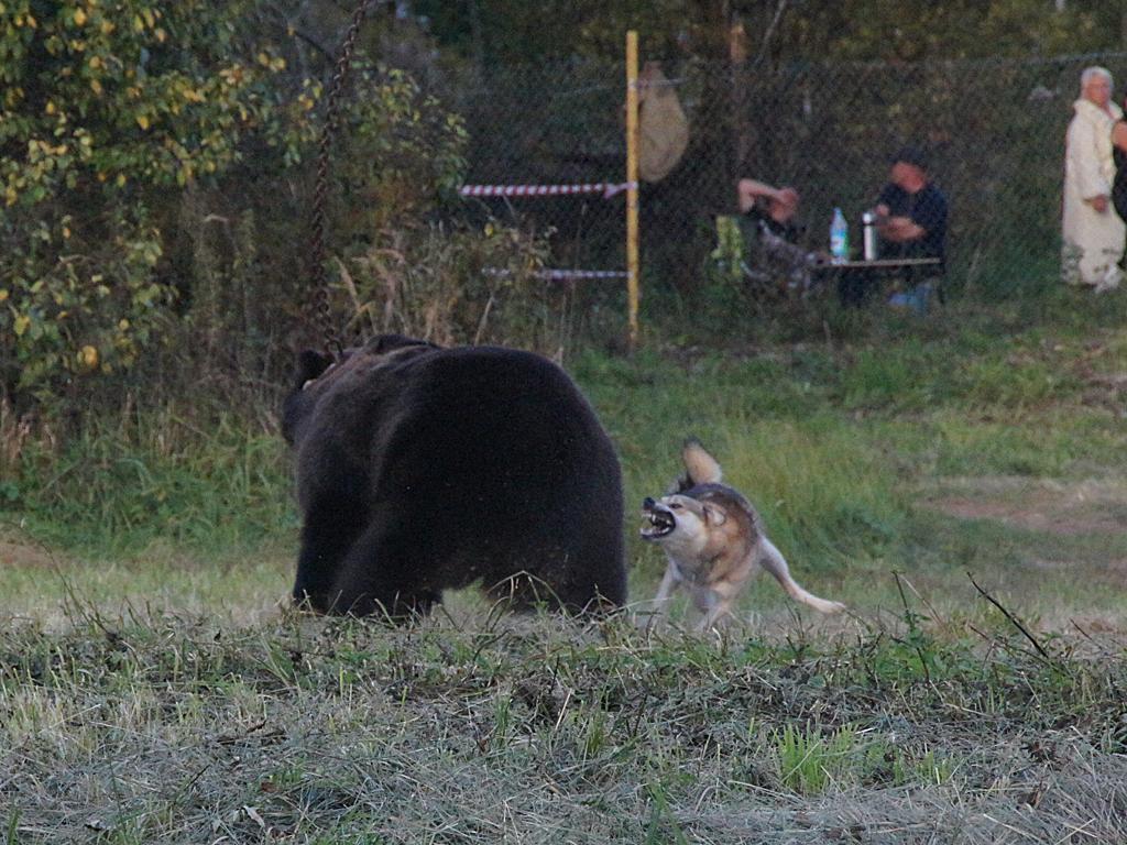 ТаяИМедведь3.jpg