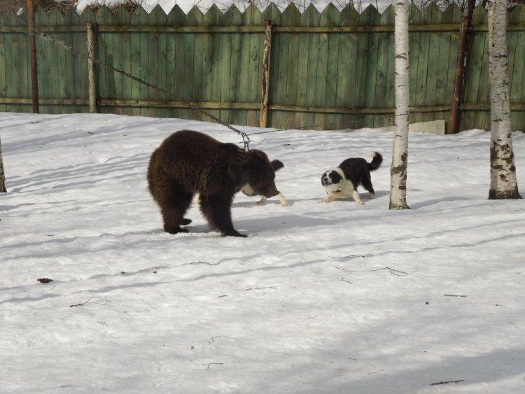 Скади_и_Тяпля_по_медведю.JPG